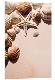 Stampa su schiuma dura  Starfish and shells
