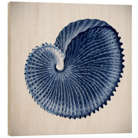 Legno  Seashell - Mandy Reinmuth
