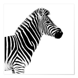 Poster  Safari Profile Collection - Zebra White Edition II - Philippe HUGONNARD