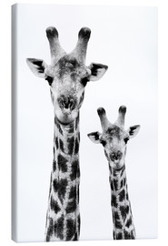 Tela  Safari Profile Collection - Portrait of Giraffe and Baby White Edition IV - Philippe HUGONNARD