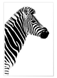 Poster  Safari Profile Collection - Zebra White Edition III - Philippe HUGONNARD