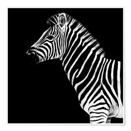 Poster  Safari Profile Collection - Zebra Black Edition II - Philippe HUGONNARD