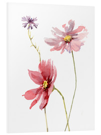 Stampa su schiuma dura  Cosmos flower and Cornflower - Verbrugge Watercolor