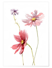 Poster Premium  Cosmos flower and Cornflower - Verbrugge Watercolor