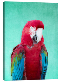 Stampa su tela  Tropical Macaw bird art poster - Alex Saberi