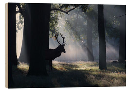 Legno  Stag in the morning light - Alex Saberi