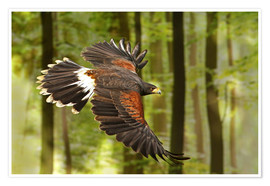 Poster Premium  Birds of Prey - WildlifePhotography