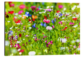 Alluminio Dibond  Flower meadow - fotoping