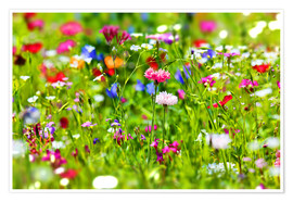 Poster  Flower meadow - fotoping