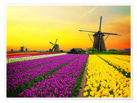 Poster Premium  Dutch windmills and fields of tulips