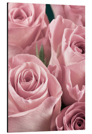Alluminio Dibond  Bunch of roses in pale pink