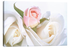 Stampa su tela  Roses on a white background
