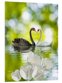 Stampa su PVC  Two swans in love