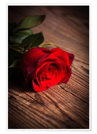 Poster Premium  Red rose on wood