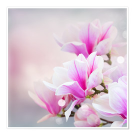 Poster Premium  Magnolia flowers on bokeh background