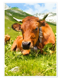 Poster Premium  Cow with bell on mountain pasture