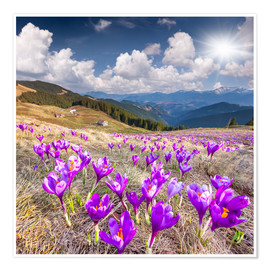Poster Premium Crocuses in a mountain landscape