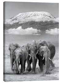 Tela  Elephant herd with Kilimanjaro
