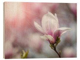 Stampa su legno  Magnolia flower in sunlight