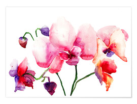 Poster Premium  Pink orchids