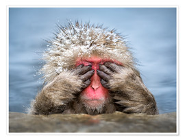 Poster Premium Japanese Macaque in a hot spring