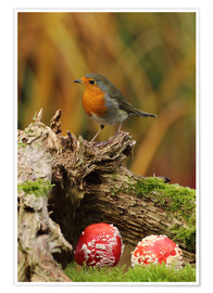 Poster Premium  Robin in the fairy forest - Uwe Fuchs