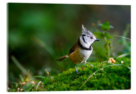 Stampa su vetro acrilico  Cute tit standing on the forest ground - Peter Wey