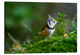 Stampa su alluminio  Cute tit standing on the forest ground - Peter Wey