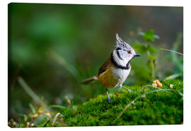 Stampa su tela  Cute tit standing on the forest ground - Peter Wey