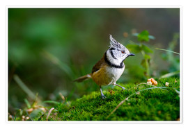 Poster Premium  Cute tit standing on the forest ground - Peter Wey