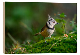 Stampa su legno  Cute tit standing on the forest ground - Peter Wey