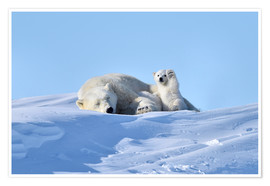 Poster Premium  Polar bear mother and cub