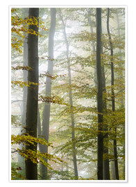 Poster Premium Foggy forest in autumn foliage