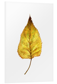 Forex  Birch Leaf - RNDMS