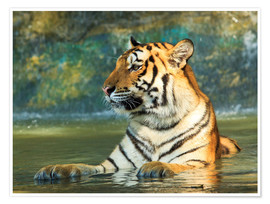 Poster Premium  Tiger lying in the water