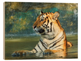 Stampa su legno  Tiger lying in the water