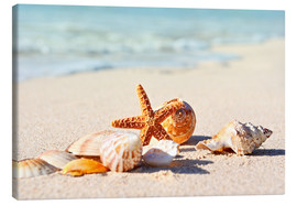 Tela  Starfish and shells