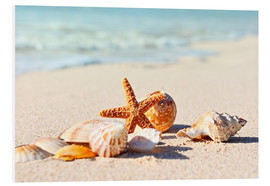 Forex  Starfish and shells