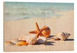 Stampa su legno  Starfish and shells