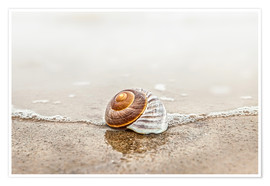 Poster Premium Lonely shell on a beach
