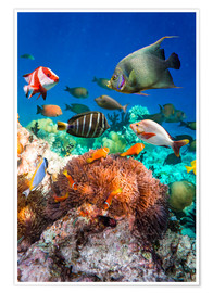 Coral reef in the Maldives