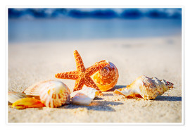 Poster Premium Starfish and sea shells
