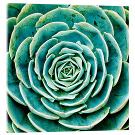 Finlay and Noa - Succulent Blue Green Nature Plant