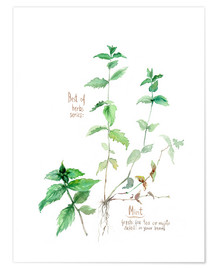 Poster  Herbs & Spices collection: Mint - Verbrugge Watercolor