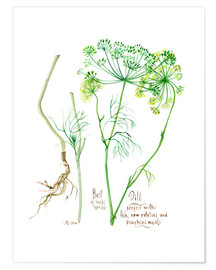 Poster  Herbs & Spices collection: Dill - Verbrugge Watercolor