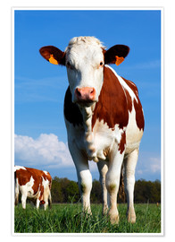 Poster  Cow Anna