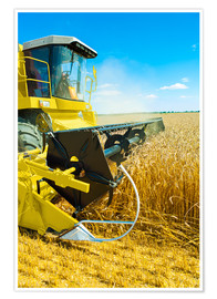 Poster Premium  Combine harvester at work