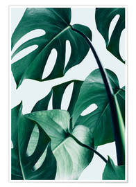 Poster Premium  Monstera - Uma 83 Oranges