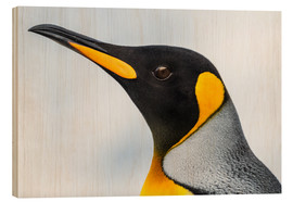 Stampa su legno  Close up of the head of a King Penguin (Aptenodytes patagonicus) with a black head and grey back wit - Nick Dale