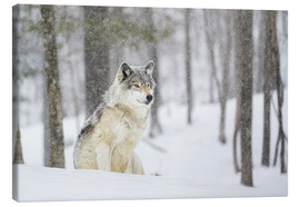 Stampa su tela  philosophical wolf - Dominic Marcoux